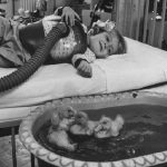 therapie_animaux_1956_zootherapie