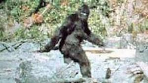 Photo la plus connue de Bigfoot prise en Californie par Patterson et Gimlin en 1967