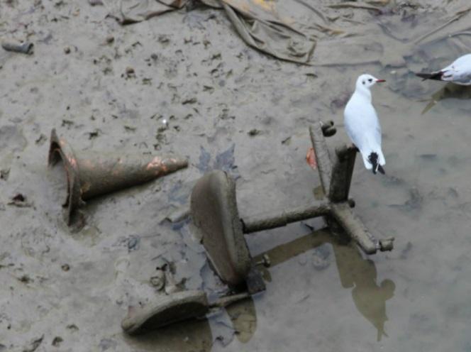 Photo insolite. Des mouettes se retrouvent sur les détritus retrouvés dans le canal de Saint-Martin à Paris lors de sa vidange.